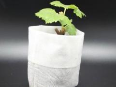育苗营养袋怎么使用才能更加有效?