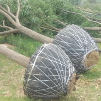 求购宽度0.8米以上,克重50克以内的,包装苗木土球用的